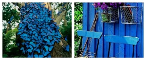 Vibrant blue butterflies to vibrant blue chair and shed.