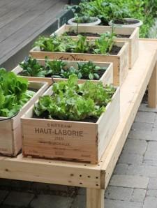 Vegetable Garden (1)