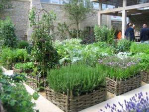 Vegetable Garden (4)